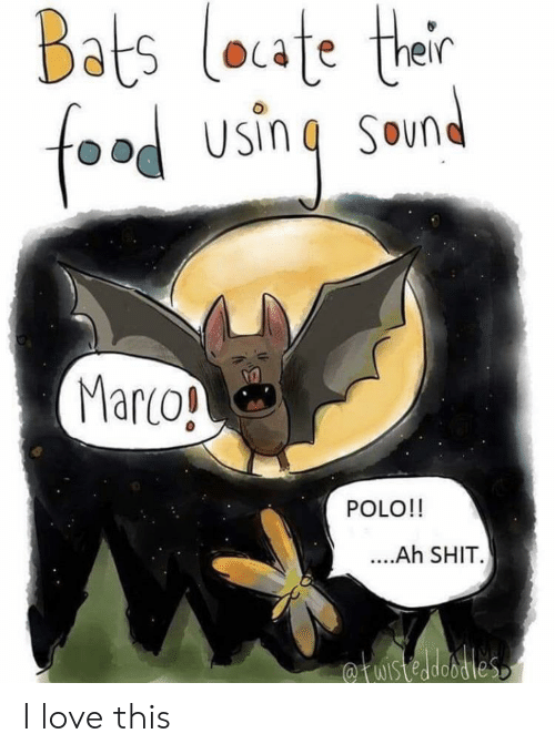 Food, Love, and Shit: Bats loate ther  food using  SOun  Marco!  POLO!!  ....Ah SHIT.  fuistedobdies I love this