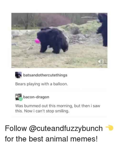 Best Animal Memes: batsandothercutethings  Bears playing with a balloon.  bacon-dragon  Was bummed out this morning, but then i saw  this. Now i can't stop smiling. Follow @cuteandfuzzybunch 👈 for the best animal memes!