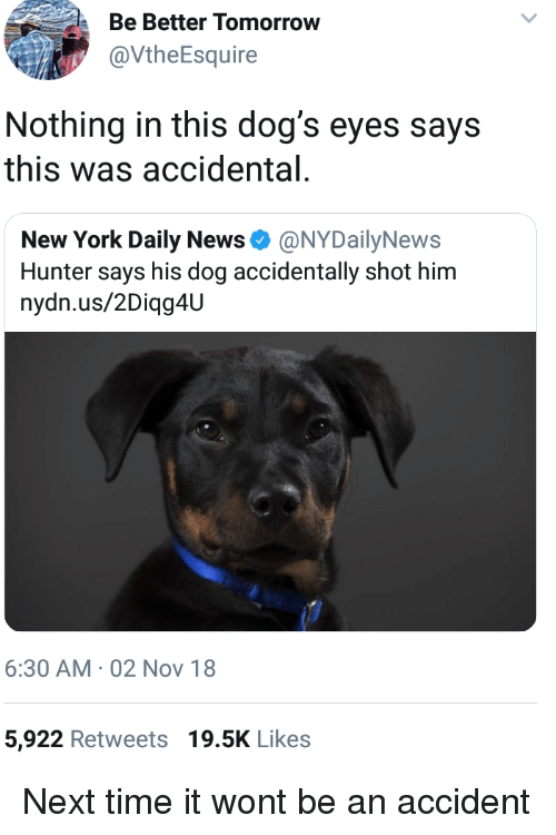 Nydailynews: Be Better Tomorrow  @VtheEsquire  Nothing in this dog's eyes says  this was accidental  New York Daily News Φ @NYDailyNews  Hunter says his dog accidentally shot him  nydn.us/2Diqg4U  6:30 AM 02 Nov 18  5,922 Retweets 19.5K Likes Next time it wont be an accident