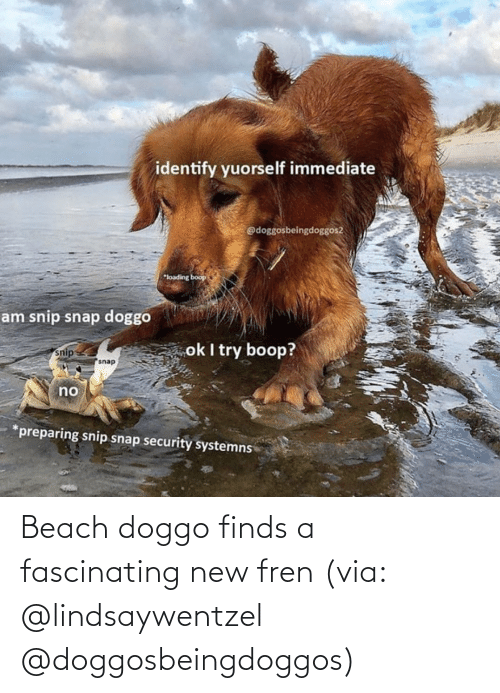 Instagram: Beach doggo finds a fascinating new fren (via: @lindsaywentzel @doggosbeingdoggos)