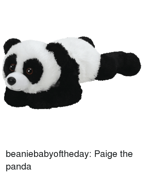 Tumblr, Panda, and Blog: beaniebabyoftheday:  Paige the panda