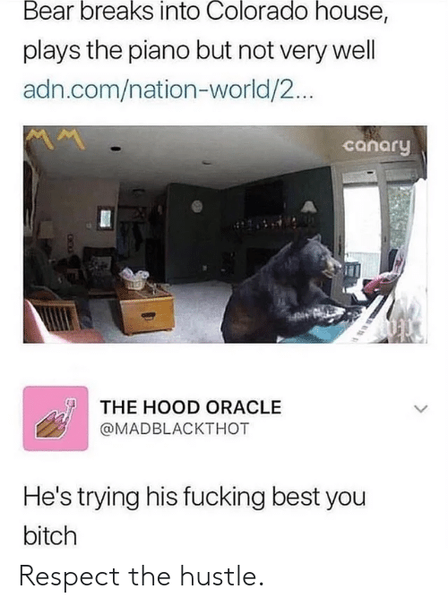 Hood: Bear breaks into Colorado house,  plays the piano but not very well  adn.com/nation-world/2...  canary  THE HOOD ORACLE  @MADBLACKTHOT  He's trying his fucking best you  bitch Respect the hustle.