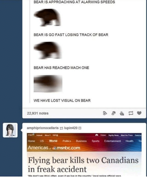 Politics, Lost, and Bear: BEAR IS APPROACHING AT ALARMING SPEEDS  BEAR IS GO FAST LOSING TRACK OF BEAR  BEAR HAS REACHED MACH ONE  WE HAVE LOST VISUAL ON BEAR  22,931 notes  amphiprionocellaris lupin420  Home US World Politics BusinessSports Entertainment Health Te  Americas msnbc.com  Flying bear kills two Canadians  in freak accident