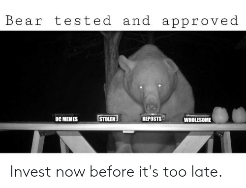 Memes Wholesome: Bear tested and approved  STOLEN  REPOSTS  oC MEMES  WHOLESOME Invest now before it's too late.
