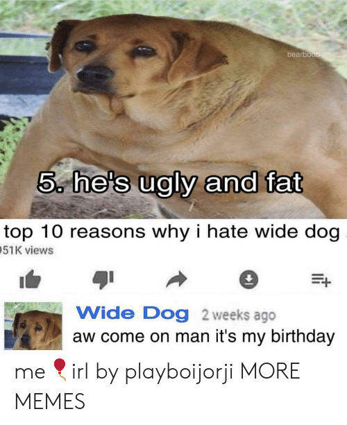 its my birthday: bearboo  5, he's ualv and fat  top 10 reasons why i hate wide dog  51K views  Wide Dog 2 weeks ago  aw come on man it's my birthday me🎈irl by playboijorji MORE MEMES
