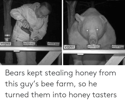 Bears: Bears kept stealing honey from this guy's bee farm, so he turned them into honey tasters
