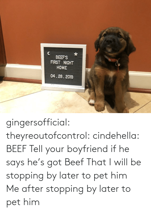 If He: BEEF'S  FIRST NIGHT  HOME  04.28.2019 gingersofficial:  theyreoutofcontrol:  cindehella: BEEF Tell your boyfriend if he says he's got Beef That I will be stopping by later to pet him     Me after stopping by later to pet him