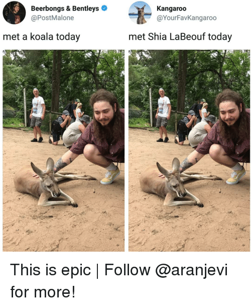Memes, Shia LaBeouf, and Today: Beerbongs & Bentleys  @PostMalone  Kangaroo  @YourFavKangarod  met a koala today  met Shia LaBeouf today This is epic | Follow @aranjevi for more!