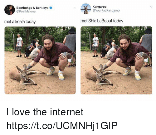 Internet, Love, and Shia LaBeouf: Beerbongs & Bentleys  @PostMalone  Kangaroo  @YourFavKangaroo  met a koala today  met Shia LaBeouf today I love the internet https://t.co/UCMNHj1GIP