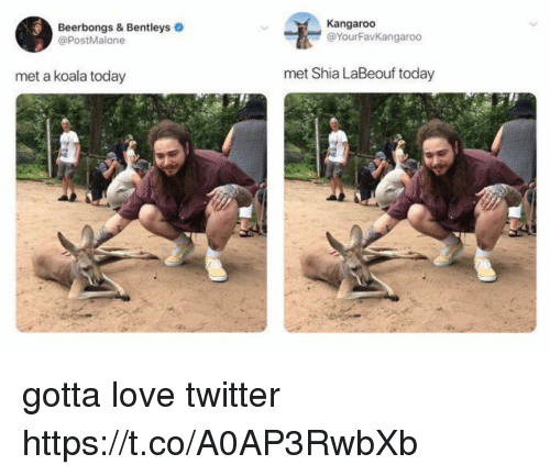 Love, Shia LaBeouf, and Twitter: Beerbongs & Bentleys  @PostMalone  Kangaroo  @YourFavKangaroo  met a koala today  met Shia LaBeouf today gotta love twitter https://t.co/A0AP3RwbXb