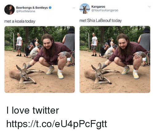 Funny, Love, and Shia LaBeouf: Beerbongs & Bentleys  @PostMalone  Kangaroo  @YourFavKangaroo  met a koala today  met Shia LaBeouf today I love twitter https://t.co/eU4pPcFgtt