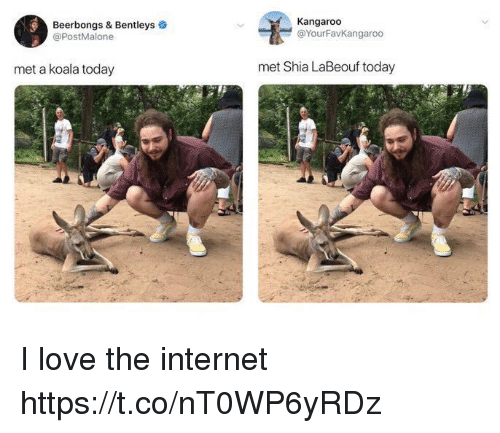 Internet, Love, and Shia LaBeouf: Beerbongs & Bentleys  @PostMalone  Kangaroo  @YourFavkangaroo  met a koala today  met Shia LaBeouf today  1l I love the internet https://t.co/nT0WP6yRDz