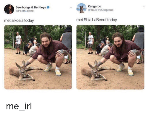 Shia LaBeouf, Today, and Irl: Beerbongs & Bentleys  @PostMalone  Kangaroo  @YourFavKangaroo  met a koala today  met Shia LaBeouf today me_irl