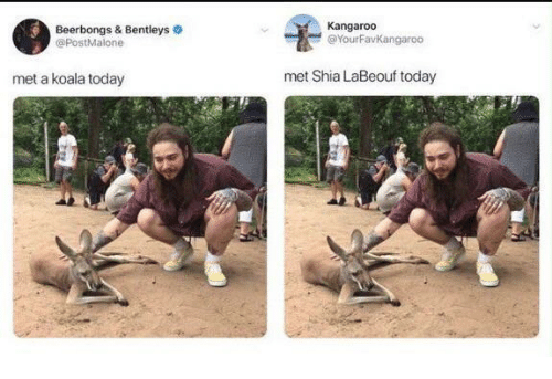 Shia LaBeouf, Today, and Koala: Beerbongs & Bentleys  @PostMalone  Kangaroo  @YourFavKangaroo  met a koala today  met Shia LaBeouf today