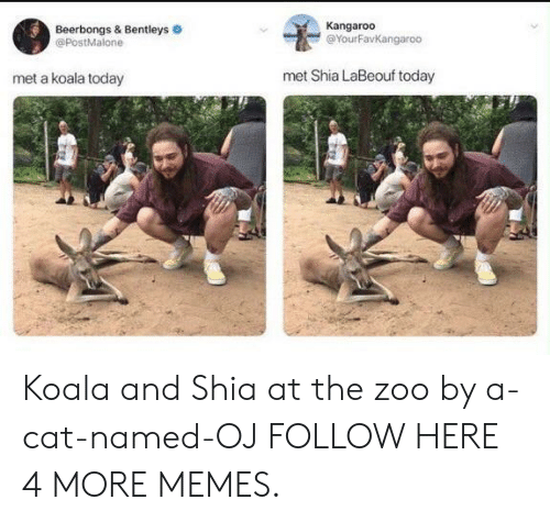 Dank, Memes, and Shia LaBeouf: Beerbongs & Bentleys  @PostMalone  Kangaroo  @YourFavKangaroo  met a koala today  met Shia LaBeouf today Koala and Shia at the zoo by a-cat-named-OJ FOLLOW HERE 4 MORE MEMES.