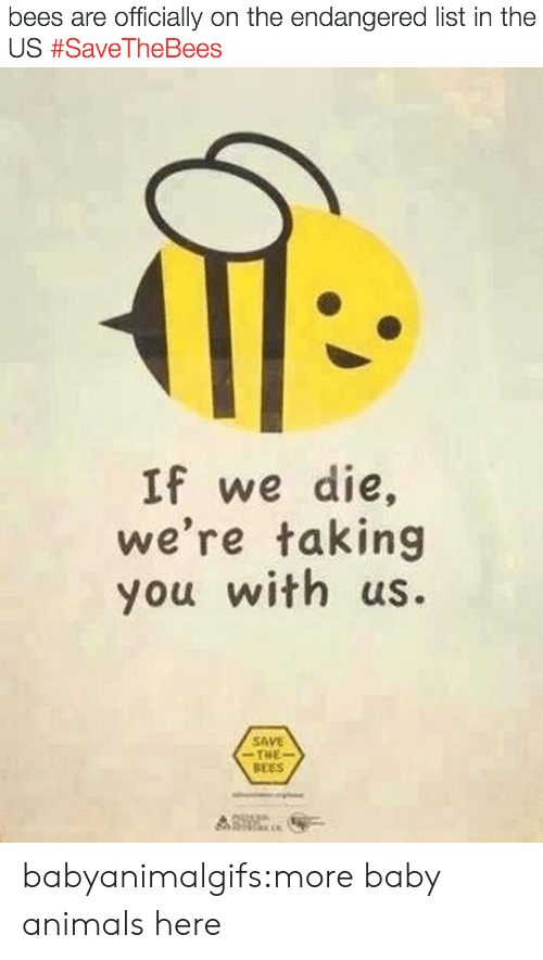 Animals, Tumblr, and Blog: bees are officially on the endangered list in the  US #SaveTheBees   If we die,  we're taking  you with us.  SAVE  THE  BEES babyanimalgifs:more baby animals here