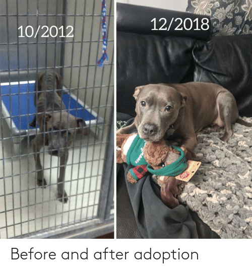 before and after: Before and after adoption