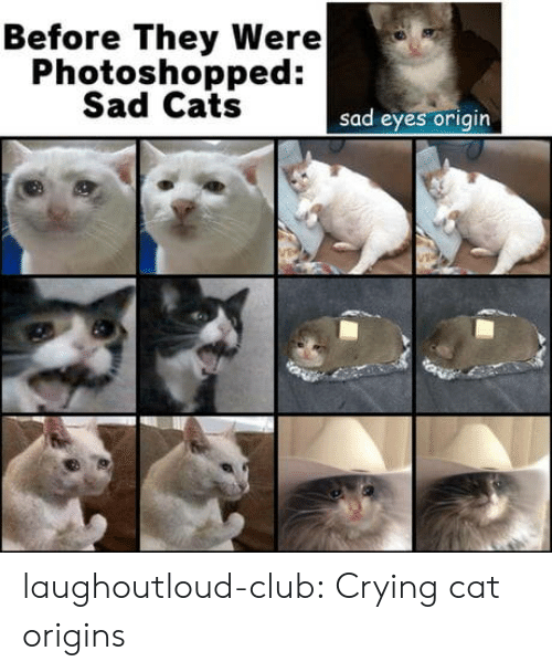 Cats, Club, and Crying: Before They Were  Photoshopped:  Sad Cats  sad eyes origin laughoutloud-club:  Crying cat origins
