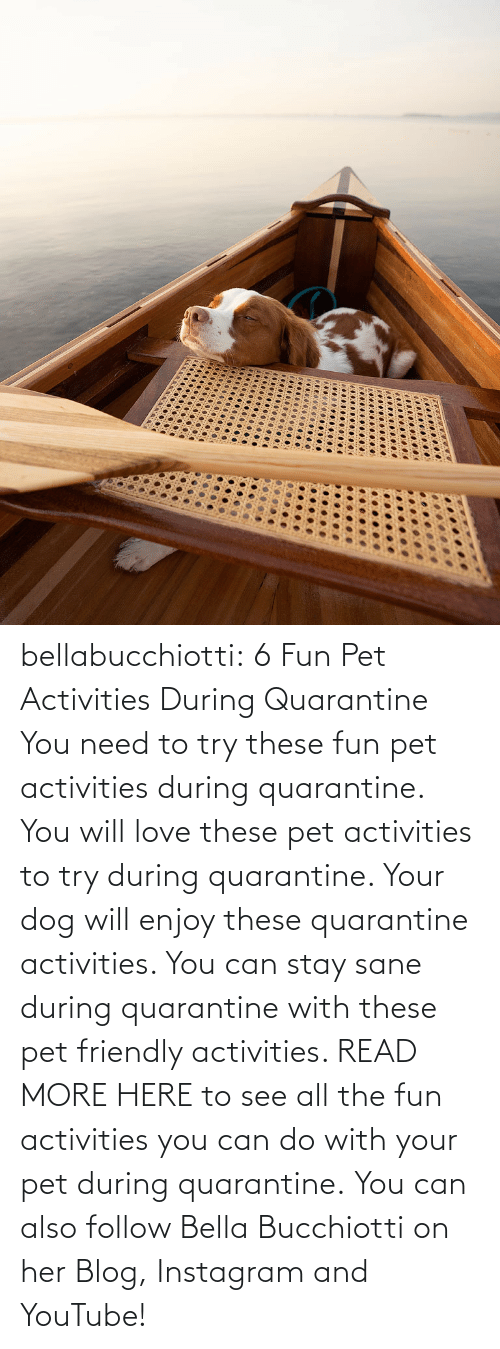 You Will: bellabucchiotti:  6 Fun Pet Activities During Quarantine    You need to try  these fun pet activities during quarantine. You will love these pet  activities to try during quarantine. Your dog will enjoy these  quarantine activities. You can stay sane during quarantine with these  pet friendly activities.   READ MORE HERE to see all the fun activities you can do with your pet during quarantine.  You can also follow Bella Bucchiotti on her Blog, Instagram and YouTube!