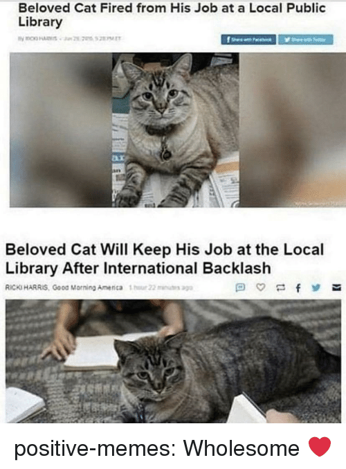 Memes, Tumblr, and Good Morning: Beloved Cat Fired from His Job at a Local Public  Library  Beloved Cat Will Keep His Job at the Local  Library After International Backlash  RICKS HARRIS, Good Morning Amenca 1  22u positive-memes:  Wholesome ❤️