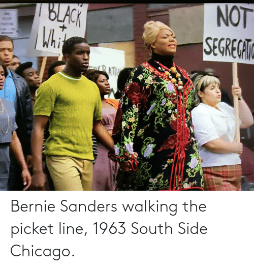 Bernie Sanders: Bernie Sanders walking the picket line, 1963 South Side Chicago.