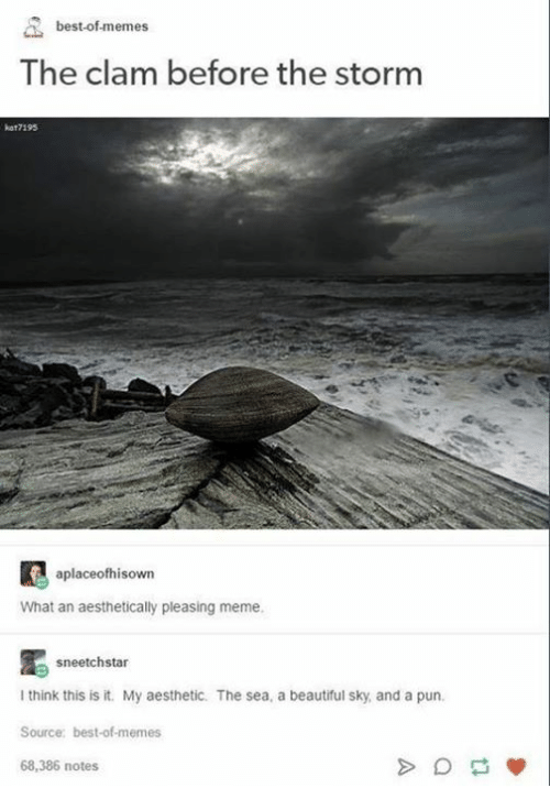 Best Of Memes: best-of-memes  The clam before the storm  kat7195  aplaceofhisown  What an aesthetically pleasing meme  sneetchstar  I think this is it. My aesthetic. The sea, a beautiful sky, and a pun.  Source: best-of-memes  68,386 notes