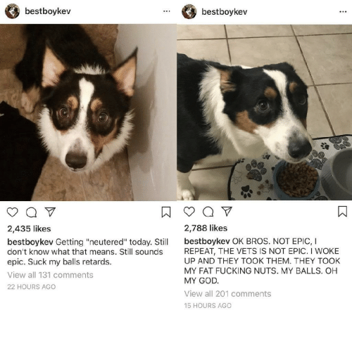 "Fucking, God, and Oh My God: bestboykev  bestboykev  2,435 likes  2,788 likes  bestboykev Getting ""neutered"" today. Stil bestboykev OK BROS. NOT EPIC, I  don't know what that means. Still sounds  epic. Suck my balls retards.  View all 131 comments  22 HOURS AGO  REPEAT, THE VETS IS NOT EPIC. I WOKE  UP AND THEY TOOK THEM. THEY TOOK  MY FAT FUCKING NUTS. MY BALLS. OH  MY GOD  View all 201 comments  15 HOURS AGO"
