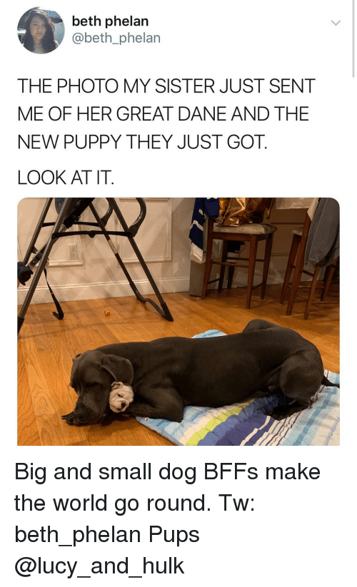 Memes, Hulk, and Lucy: beth phelan  @beth_phelan  THE PHOTO MY SISTER JUST SENT  ME OF HER GREAT DANE AND THE  NEW PUPPY THEY JUST GOT.  LOOK AT IT. Big and small dog BFFs make the world go round. Tw: beth_phelan Pups @lucy_and_hulk