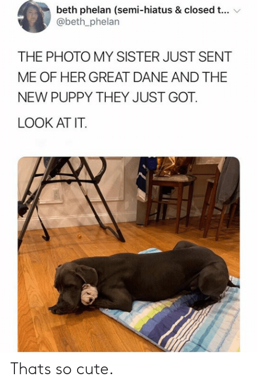 Beth: beth phelan (semi-hiatus & closed t...  @beth_phelan  THE PHOTO MY SISTER JUST SENT  ME OF HER GREAT DANE AND THE  NEW PUPPY THEY JUST GOT  LOOK AT IT. Thats so cute.