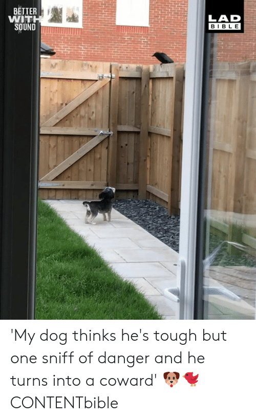 Dank, Bible, and Tough: BETTER  WIT  LAD  BIBLE 'My dog thinks he's tough but one sniff of danger and he turns into a coward' 🐶🐦  CONTENTbible