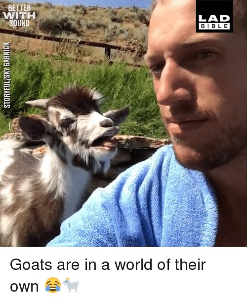 Dank, Bible, and World: BETTER  WITHH  LAD  BIBLE Goats are in a world of their own 😂🐐