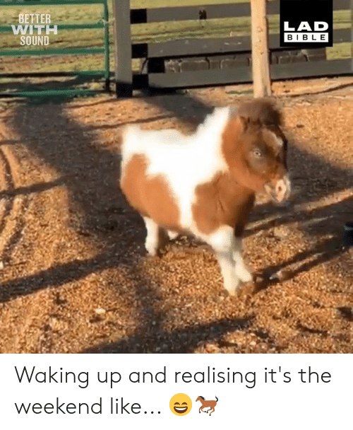 Dank, The Weekend, and 🤖: BETTER  WITI  SOUND  LAD  BIBL E Waking up and realising it's the weekend like... 😄🐎