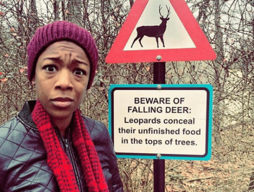 falling: BEWARE OF  FALLING DEER:  Leopards conceal  their unfinished food  in the tops of trees.