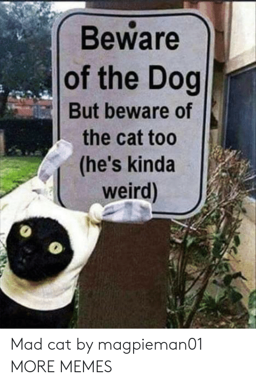Dank, Memes, and Target: Beware  of the Dog  But beware of  the cat too  (he's kinda  weird) Mad cat by magpieman01 MORE MEMES