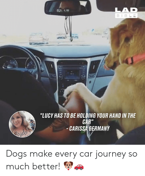"""Dank, Dogs, and Journey: BIBL E  0  """"LUCY HAS TO BE HOLDING YOUR HAND IN THE  CAR""""  CARISSA GERMANY Dogs make every car journey so much better! 🐶🚗"""