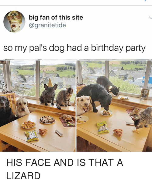 Palsing: big fan of this site  @granitetide  so my pal's dog had a birthday party HIS FACE AND IS THAT A LIZARD