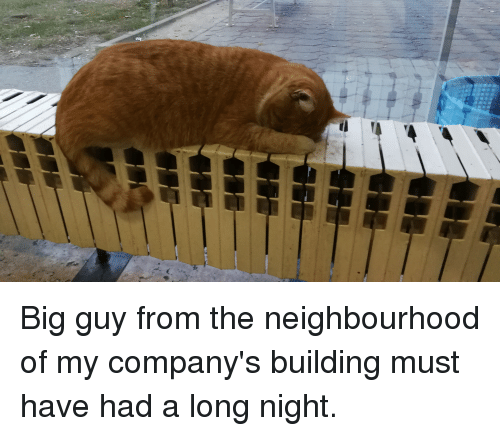 Big Guy: Big guy from the neighbourhood of my company's building must have had a long night.