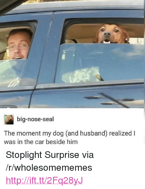 """stoplight: big-nose-seal  The moment my dog (and husband) realized l  was in the car beside him <p>Stoplight Surprise via /r/wholesomememes <a href=""""http://ift.tt/2Fq28yJ"""">http://ift.tt/2Fq28yJ</a></p>"""