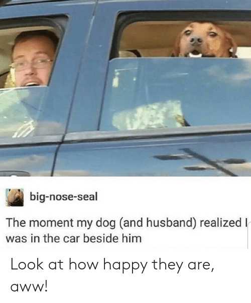Aww, Happy, and Seal: big-nose-seal  The moment my dog (and husband) realizedl  was in the car beside him Look at how happy they are, aww!