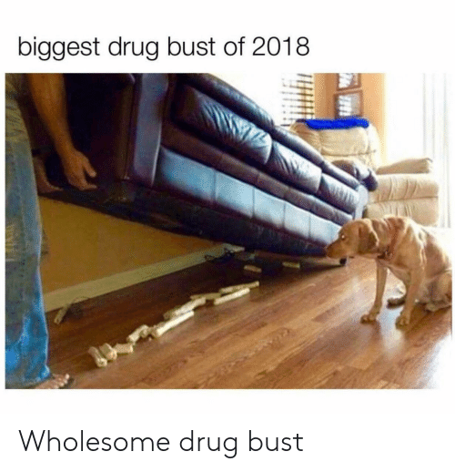 Wholesome, Drug, and Bust: biggest drug bust of 2018 Wholesome drug bust