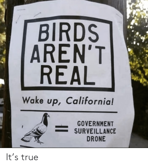 Arent: BIRDS  AREN'T  REAL  Wake up, California!  GOVERNMENT  SURVEILLANCE  DRONE It's true
