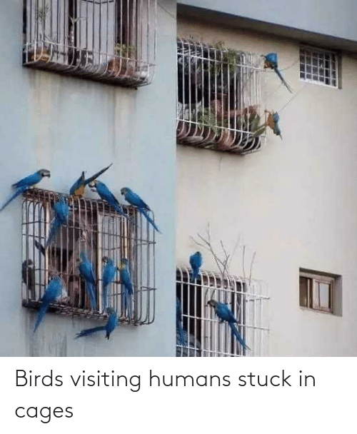 humans: Birds visiting humans stuck in cages