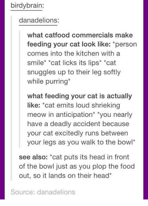 """Cat Look: birdybrain:  danadelions:  what catfood commercials make  feeding your cat look like: *person  comes into the kitchen with a  smile* *cat licks its lips* *cat  snuggles up to their leg softly  while purring*  what feeding your cat is actually  like: """"cat emits loud shrieking  meow in anticipation* """"you nearly  have a deadly accident because  your cat excitedly runs between  your legs as you walk to the bowl  see also: *cat puts its head in front  of the bowl just as you plop the food  out, so it lands on their head  Source: danadelions"""