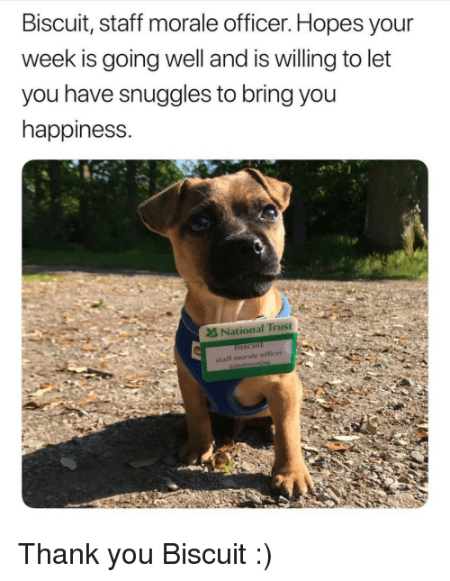 morale: Biscuit, staft morale officer. Hopes your  week is going well and is willing to let  you have snuggles to bring you  happiness.  2& National Trust  ISCUIt <p>Thank you Biscuit :)</p>