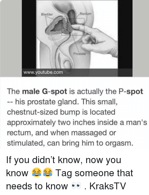 g spot: Bladder  www.youtube.com  The male G-spot is actually the P-spot  -- his prostate gland. This small,  chestnut-sized bump is located  approximately two inches inside a man's  rectum, and when massaged or  stimulated, can bring him to orgasm. If you didn't know, now you know 😂😂 Tag someone that needs to know 👀 . KraksTV