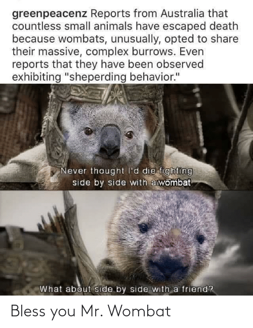 bless: Bless you Mr. Wombat