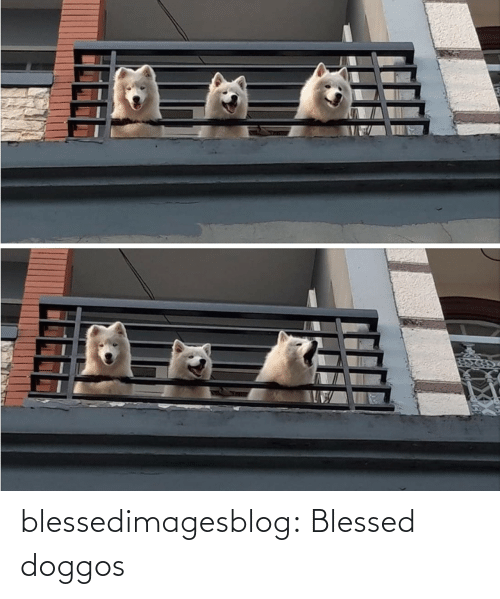 blessed: blessedimagesblog:  Blessed doggos