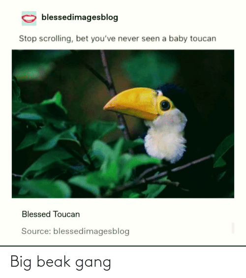 source: blessedimagesblog  Stop scrolling, bet you've never seen a baby toucan  Blessed Toucan  Source: blessedimagesblog Big beak gang