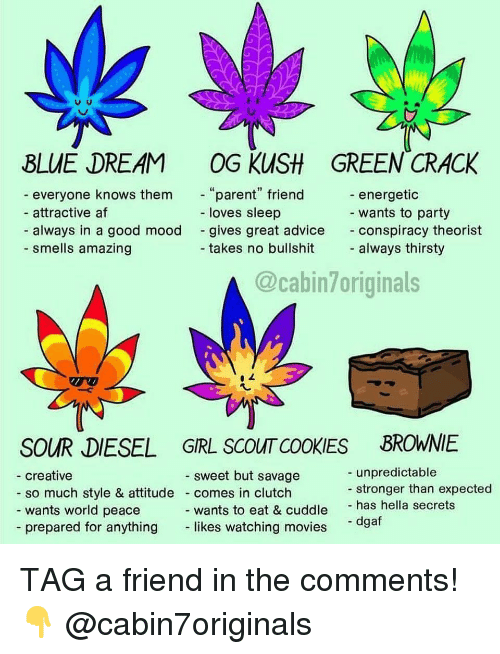 """Advice, Af, and Cookies: BLUE DREAM OG KUSH GREEN CRACK  everyone knows them  attractive af  always in a good mood  parent"""" friend  loves sleep  energetic  wants to party  conspiracy theorist  always thirsty  gives great advice  - smells amazing  takes no bullshit  @cabin7originals  SOUR DIESEL GRL SCOUT COOKIES BROWNIE  unpredictable  stronger than expected  sweet but savage  creative  so much style & attitude comes in clutch  wants world peace  wants to eat & cuddle has hella secrets  likes watching movies  - dgaf  - prepared for anything TAG a friend in the comments! 👇 @cabin7originals"""