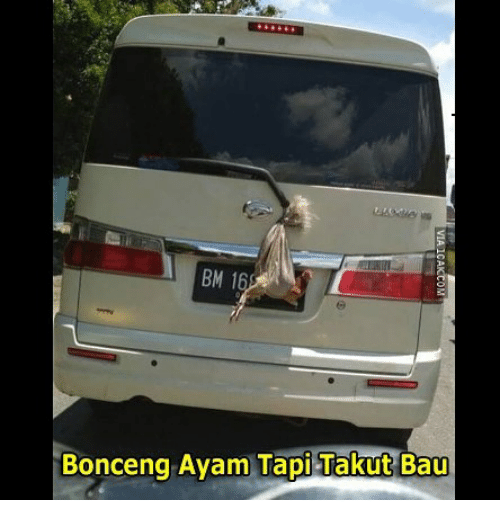 Indonesian (Language), Bau, and Ayam: BM 16  Bonceng Ayam Tapi Takut Bau